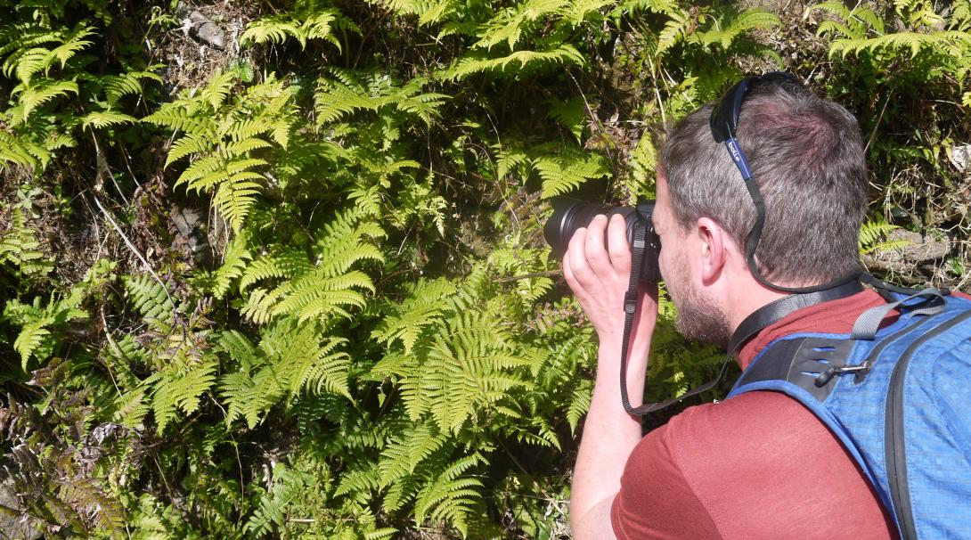 A volunteer is photographing reptiles and amphibians at our conservation project in the Himalayas in Nepal.